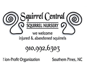 squirrel central 300x250